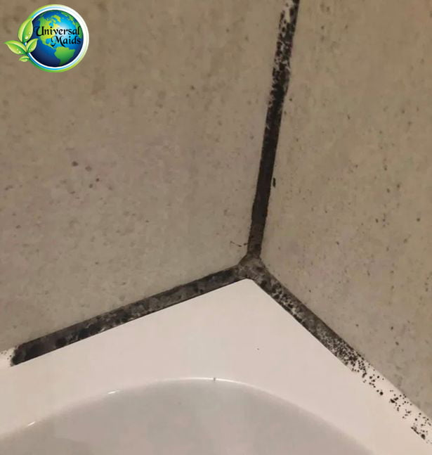 Molds on Tile and Grout