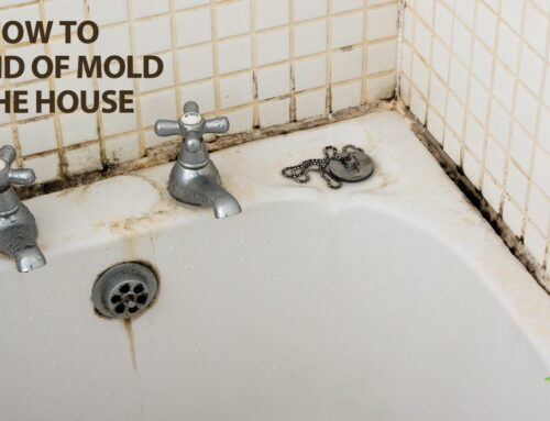 Get Rid of House Mold, Remove Mold from Bathroom